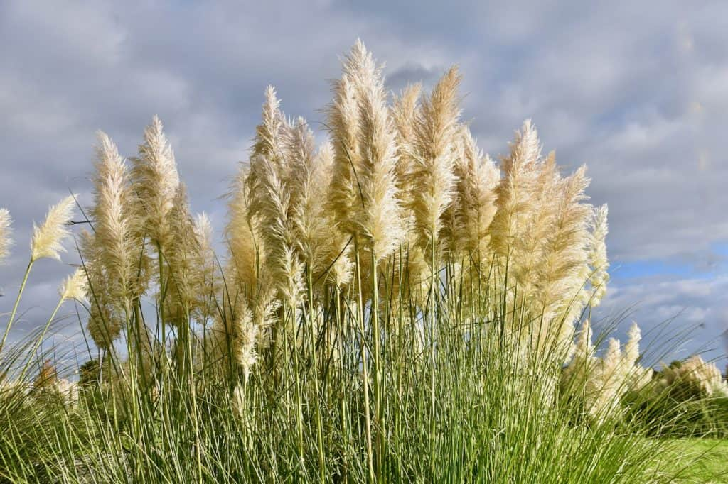 Pampas Grass Is The New Monstera Leaf
